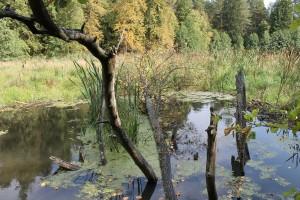 плотина на Таденке
