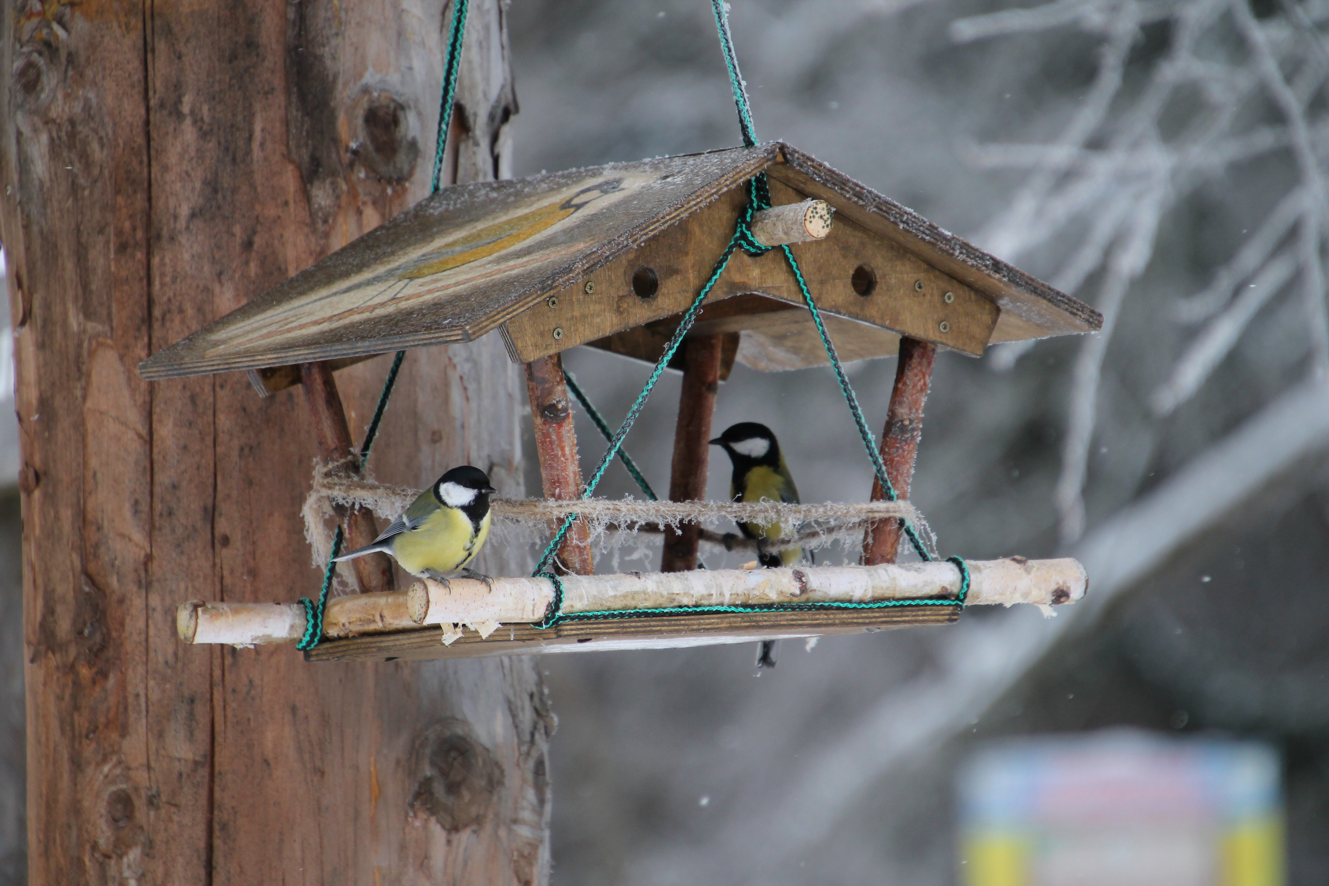 Картинки по запросу логотип покормите птиц зимой